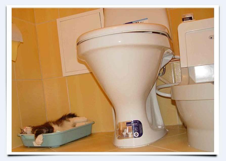Как обустроить туалет для котенка