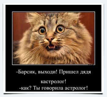 Польза от кота в квартире