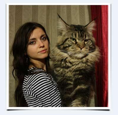 фото кошек и кошек разных пород