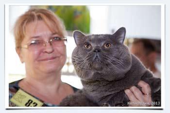 Британский кот вес в 6 месяцев