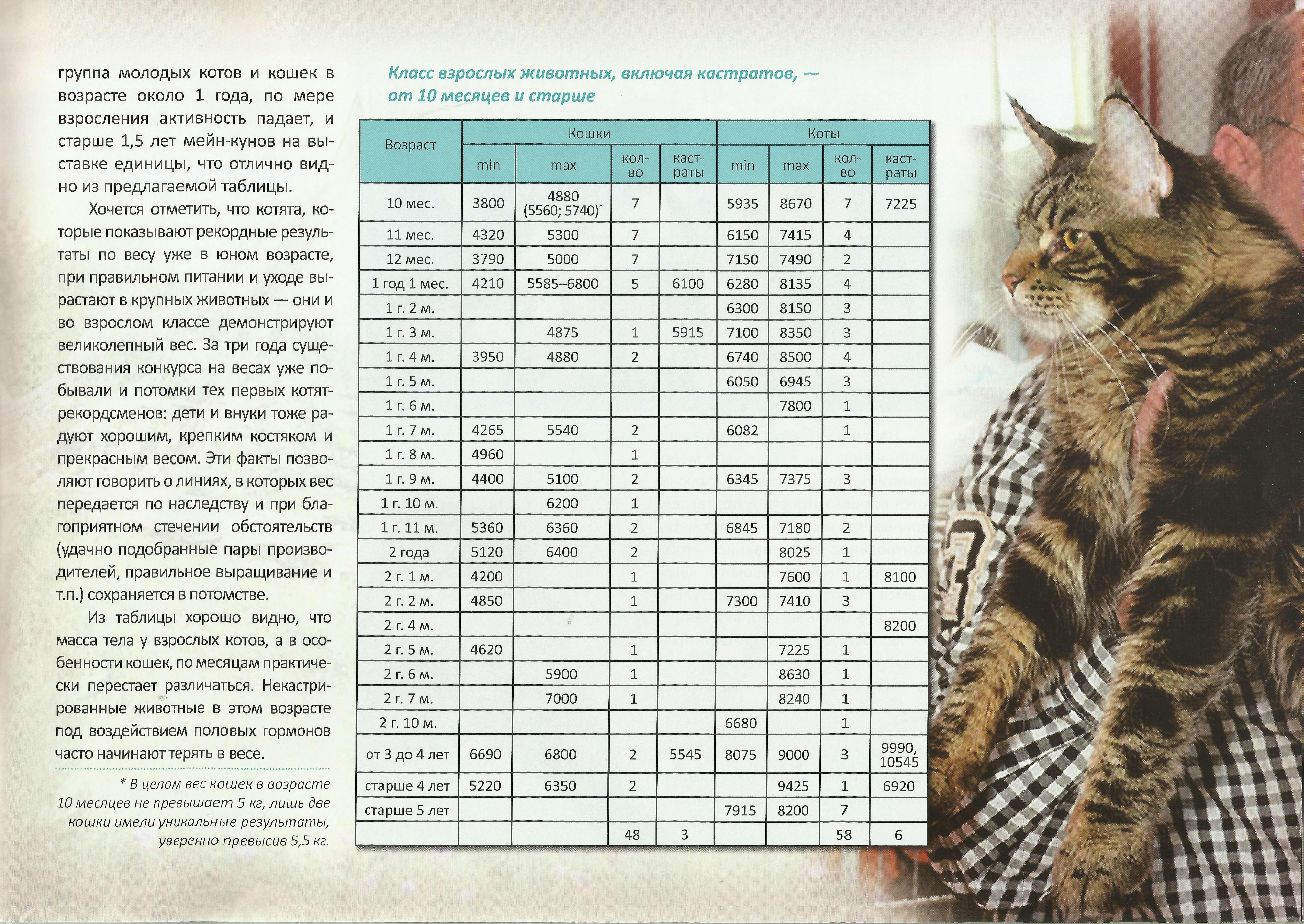 британская кошка таблица вес