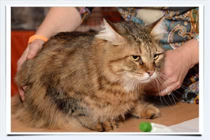 Кот 5 месяцев вес